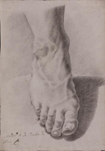 Estudio frontal de pie derecho