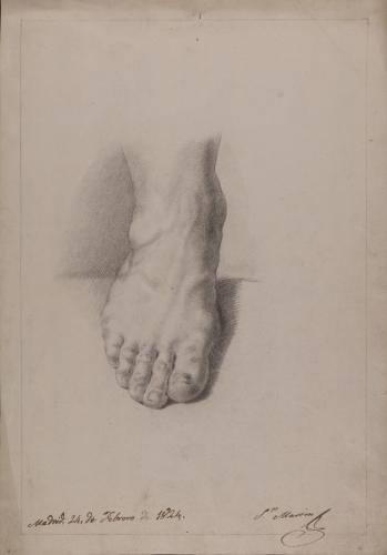 Estudio de pie frontal