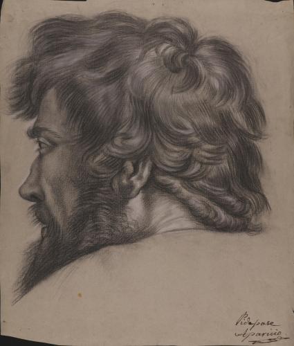 Estudio de cabeza masculina barbada de espaldas