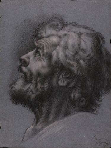 Estudio de cabeza masculina de perfil barbada hacia la izquierda