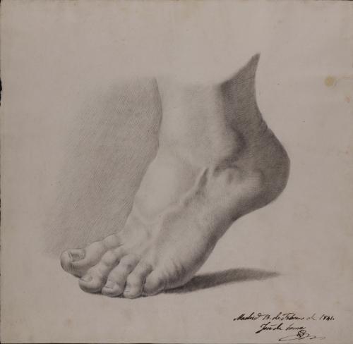 Estudio de pie izquierdo de perfil de puntillas