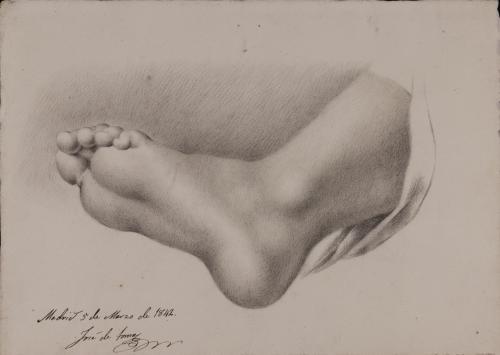 Estudio de planta de pie izquierdo desde un punto de vista inferior