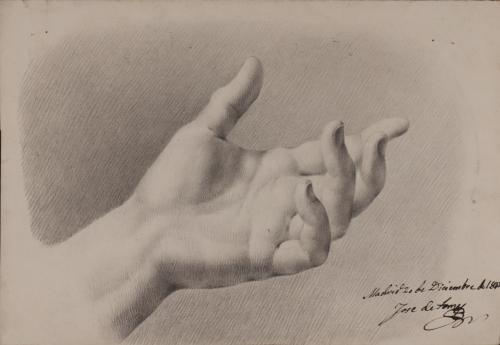 Estudio palmar de mano izquierda masculina