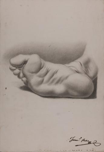 Estudio de planta de pie derecho