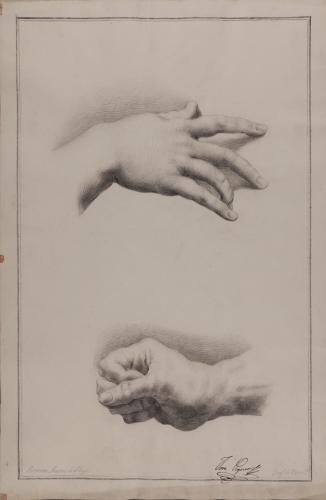 Estudio de mano derecha femenina y mano derecha masculina cerrada en forma de puño