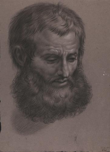 Estudio de cabeza masculina barbada inclinada hacia la derecha mirando al suelo