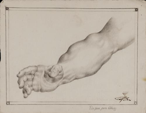 Estudio de brazo derecho masculino