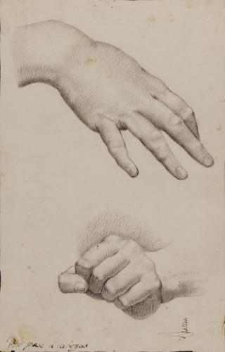 Estudio de manos derecha femenina e izquierda en puño