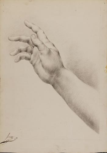 Estudio de mano y antebrazo derecho alzado