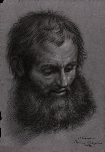 Estudio de cabeza masculina con barba completa, inclinada hacia la derecha