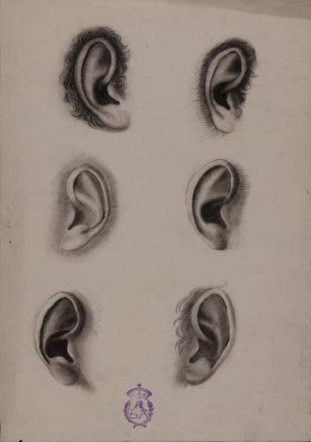 Estudio de cuatro orejas derechas y dos izquierdas