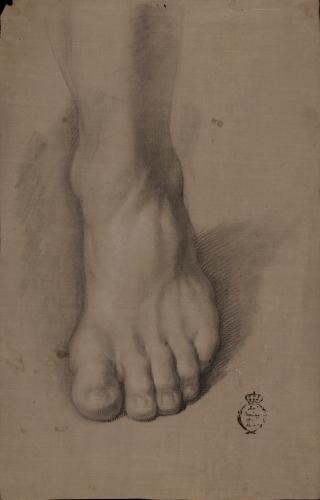 Estudio de pie izquierdo de frente