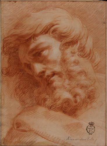 Estudio de cabeza masculina barbada