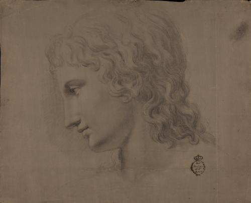 Estudio de la cabeza de Ganímedes de perfil