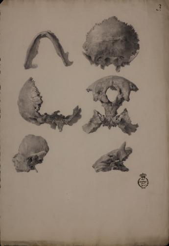 Estudio de diversas parte de un cráneo