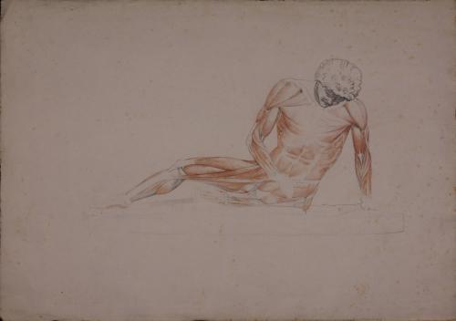 Estudio anatómico de Galo moribundo
