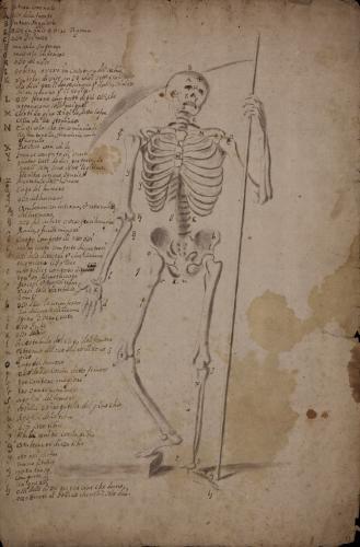 Estudio de esqueleto completo