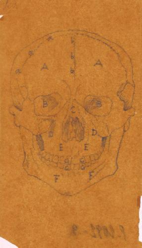 Estudio frontal del cráneo
