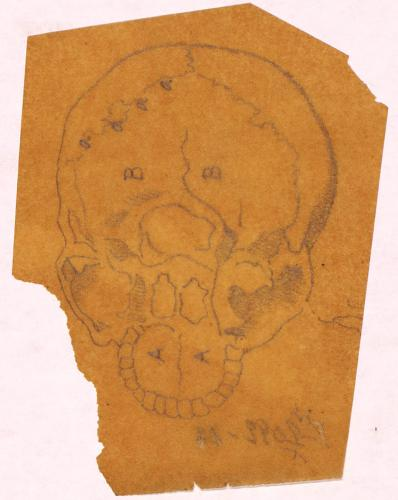 Estudio posterior del cráneo