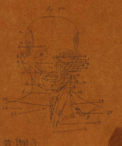 Estudio frontal de los músculos faciales y del cuello