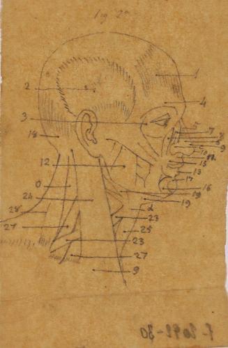 Estudio lateral de los músculos faciales y del cuello