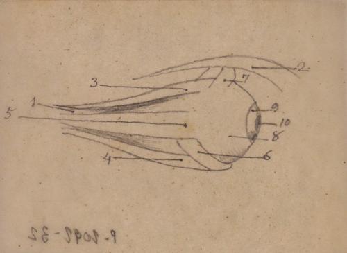Estudio anatómico del globo del ojo
