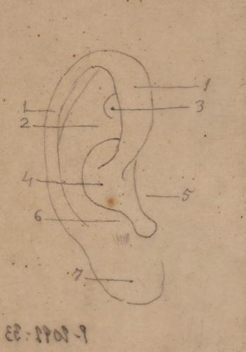Estudio de los cartílagos de la oreja