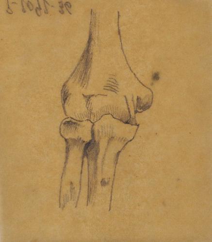 Vista anterior de la articulación del codo