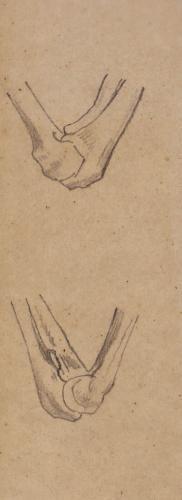 Vista lateral de la articulación del codo