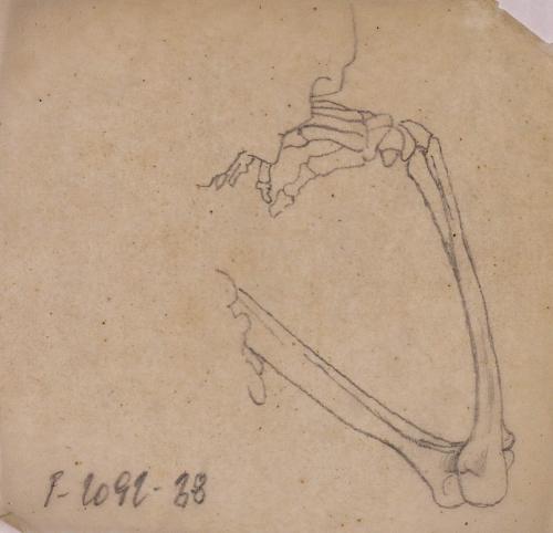 Estudio de la articulación del brazo