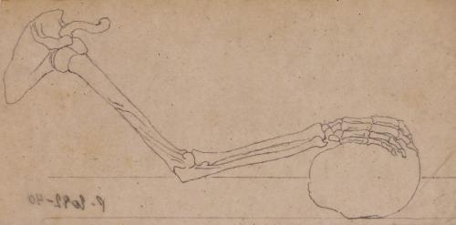 Estudio de articulación del brazo