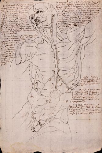 Estudio del torso de modelo anatómico