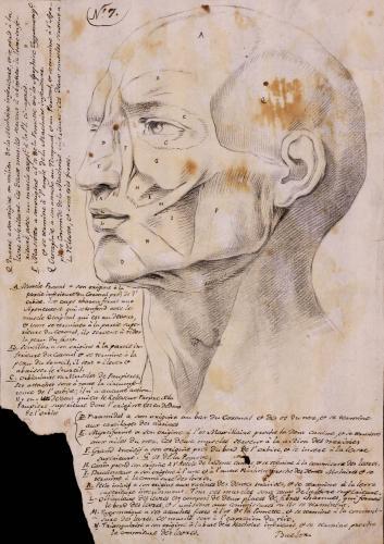 Estudio de tres cuartos de los músculos faciales