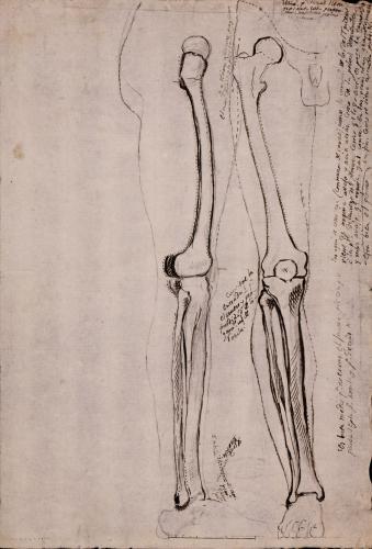 Estudio lateral y frontal de la huesos de la pierna derecha