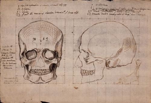 Estudio frontal y lateral del cráneo