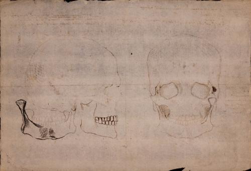 Estudio frontal y lateral de la mandíbula