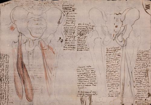 Estudio de pelvis y fémur masculina