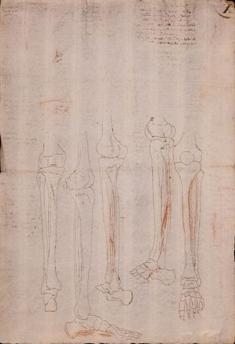 Estudio fronta, lateral y posterior de los huesos de la pierna y el pie