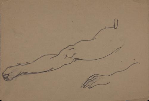 Estudio de pierna y brazo izquierdo masculinos