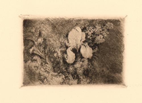Lirio y flores