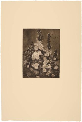Rosas y flores